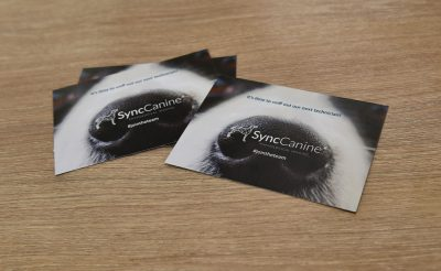 Promotional Print - Animal SyncCanine Syncthermology postcards